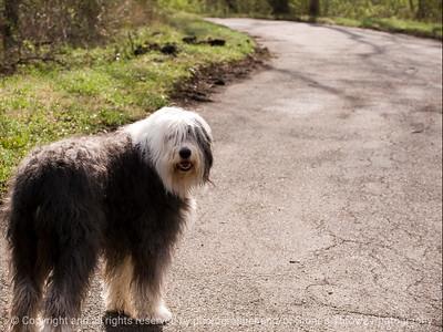 015-dog_maggie-wdsm-23mar12-002-4556