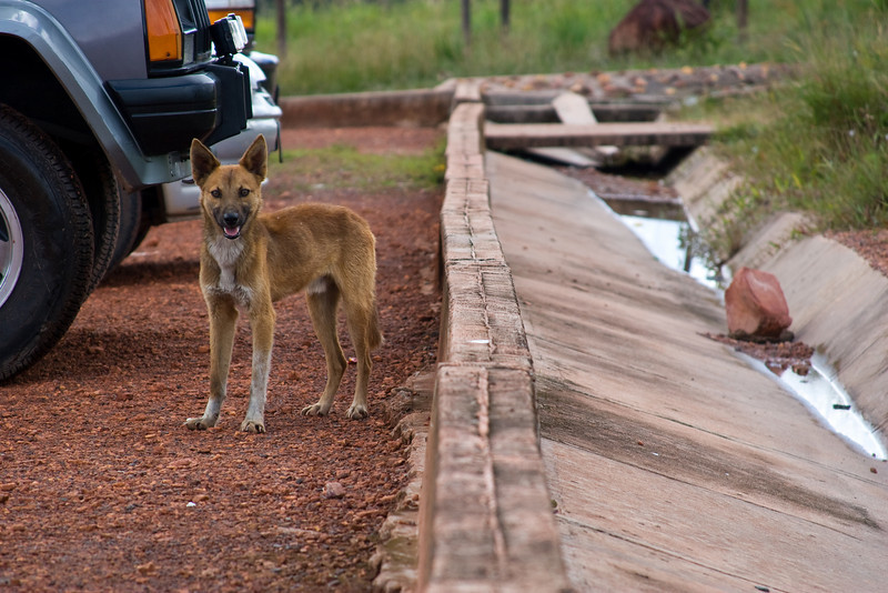 I was sitting on the curb waiting for the rest of my little tour group to return so we could load up the jeep and head back to town.  While I was waiting, this stray dog stopped for a moment to check me out.<br /> <br /> Location: The Gran Sabana, Venezuela<br /> <br /> Lens used: 28-135mm f3.5-5.6 IS