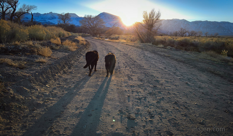 Reo and Amigo walking into the Sunset