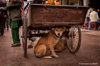 Haridwar, India   2012