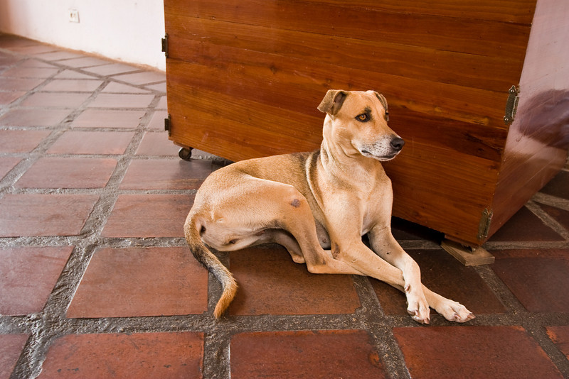 This was one of the dogs living at the pension I which I stayed.  I found its pose very dignified.<br /> <br /> Location: Cuidad Bolivar, Venezuela<br /> <br /> Lens used: 10-22mm f3.5-4.5