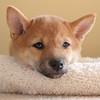 puppies24
