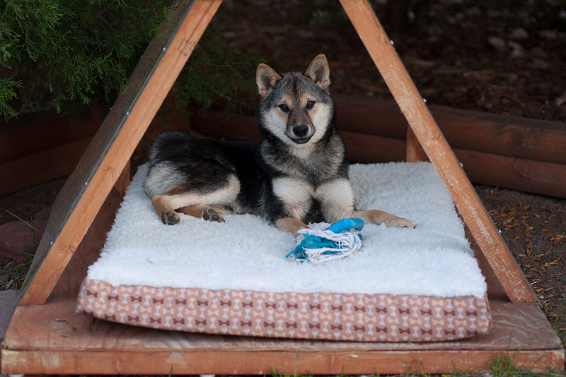 """Relaxing in the """"pup tent"""""""