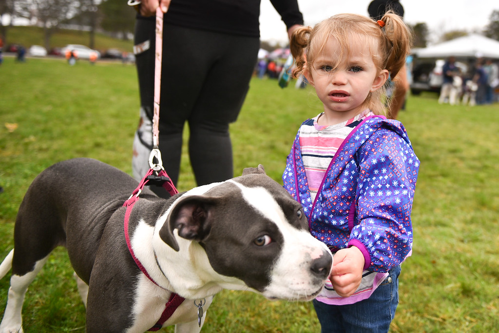 . (04/29/18 DEVENS) Alyssa Sorensen, 1, of Lynn feeds her dog Harley a treat during Sunday\'s Dogs2Vets Festival on Fort Devens.  SENTINEL & ENTERPRISE JEFF PORTER