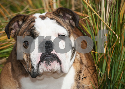 1137  This IS My Smile-Dog Series copy