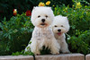 1&2_2286_WHWTrr_CH_PAW