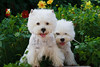 1&2_2277_WHWTrr_CH_PAW