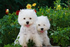 1&2_2270_WHWTrr_CH_PAW