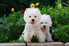 1&2_2275_WHWTrr_CH_PAW
