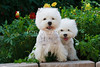 1&2_2287_WHWTrr_CH_PAW
