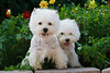 1&2_2283_WHWTrr_CH_PAW