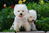 1&2_2280_WHWTrr_CH_PAW