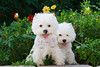 1&2_2271_WHWTrr_CH_PAW