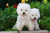 1&2_2282_WHWTrr_CH_PAW