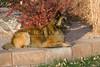 01_2009BlgnTrvrnDD_PAW