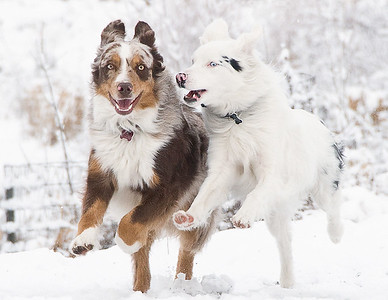 Choco and Blanca, Winter Fun