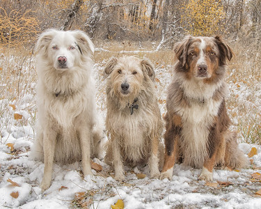 First Snow; Nina Blanca, Finnegan, Chocolate