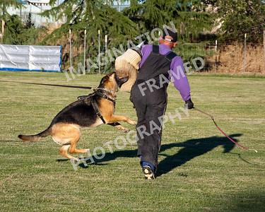 dogstock2010-2030