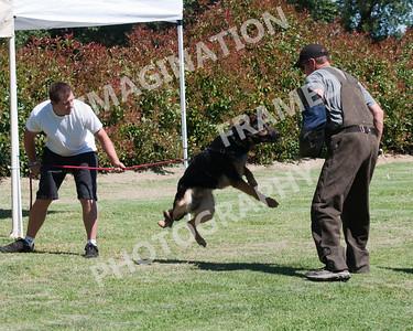 dogstock2010-2694