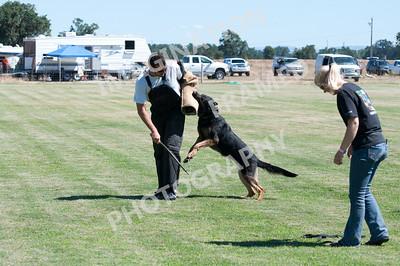 dogstock2010-2713