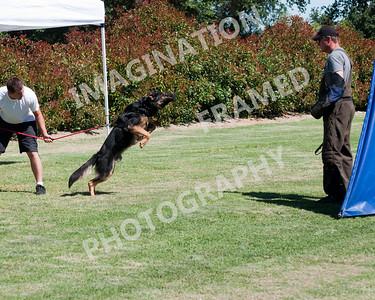 dogstock2010-2690