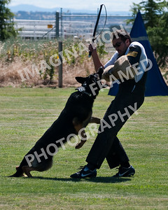 dogstock2010-2735