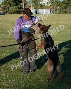dogstock2010-2024