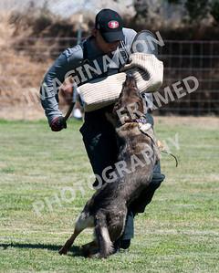 dogstock2010-3151