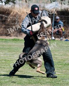 dogstock2010-3150