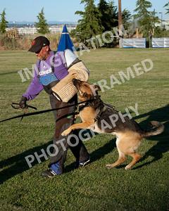 dogstock2010-2025