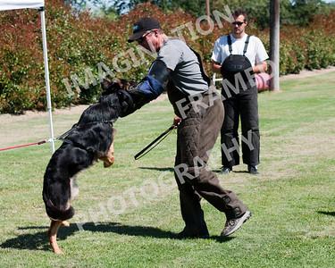 dogstock2010-2696