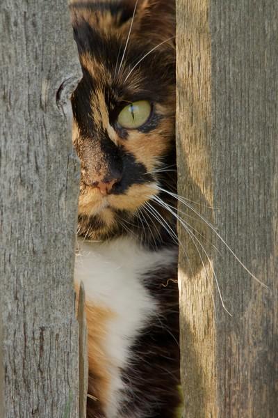 Barb's Cat