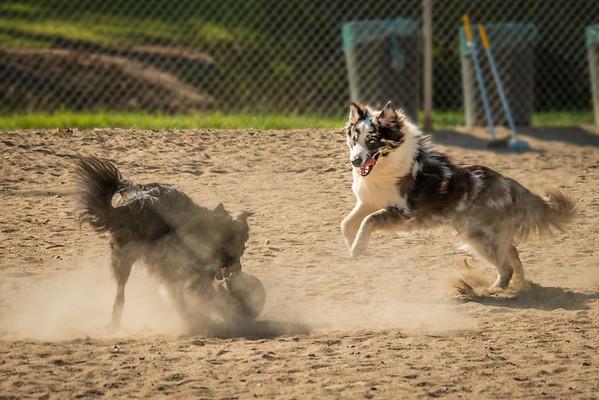 August & September, Dog Park