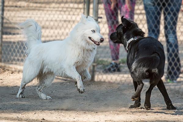 Dog Park, April 20