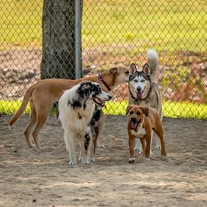 Dog Park, August 11