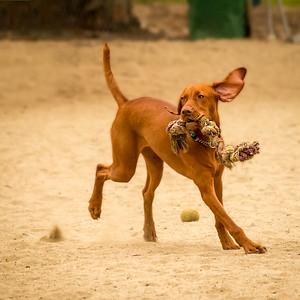 Dog Park: September 7