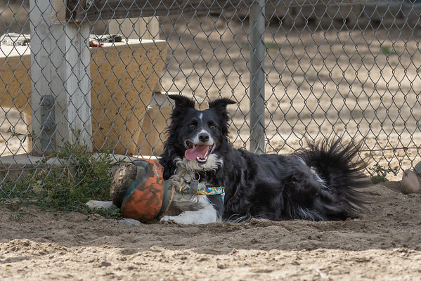 May 2016. General Dog Park pictures.
