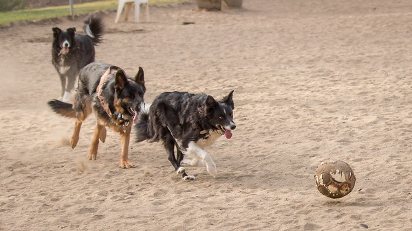 December 25, Dog Park