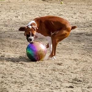 February 2: Romur and the Gazing Ball