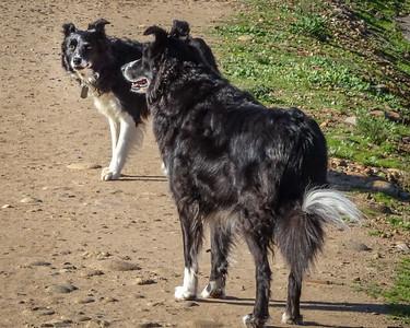 January 16: Caitlin & Carly at Lake Murray