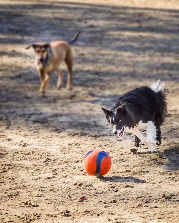 January 25: Dog Park