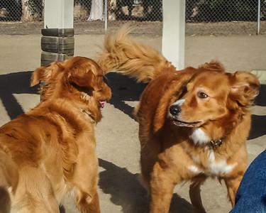 November 6: Lily & Golden Retriever