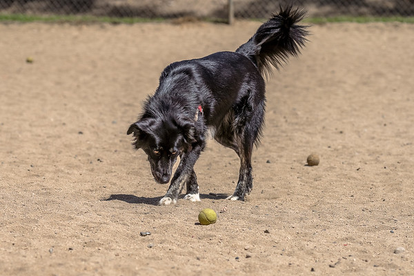 2018, 25 April - at the Dog Park with Dixie.
