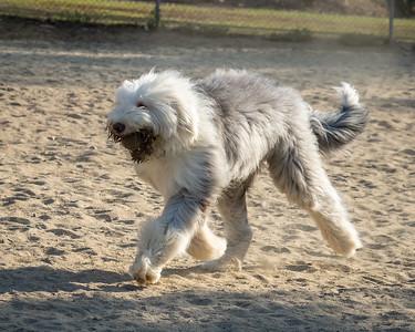 August 1: Dog Park--Spanner,  Lexi, & Freddy