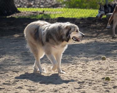 Dog Park, April 21
