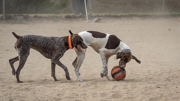 Dog Park: July 1