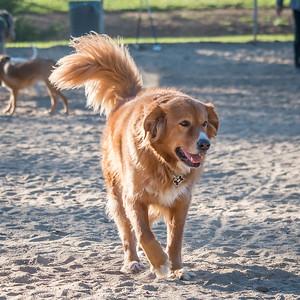 February 16 & 17: Dog Park