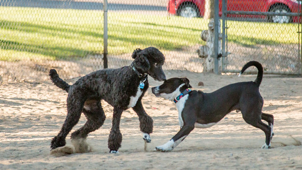 February 20: Dog Park