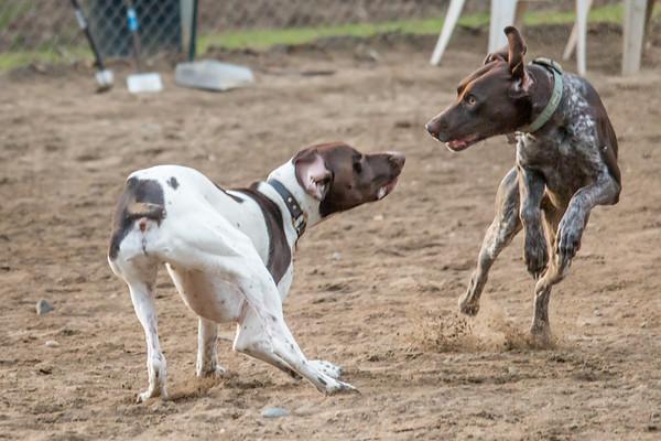 January 14: Dog Park