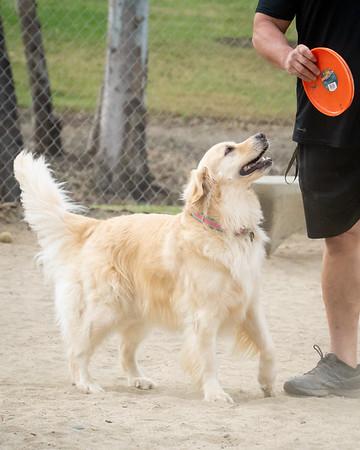 July 18: Dog Park